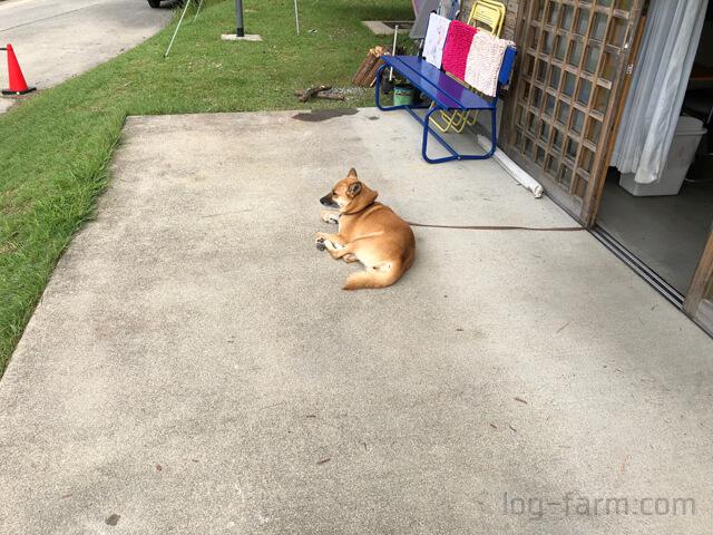 管理棟で飼われている犬