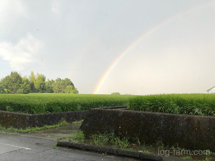 ゲリラ豪雨と虹