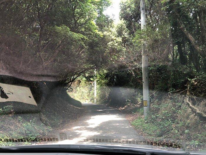 田の浦野営場へと続く林道