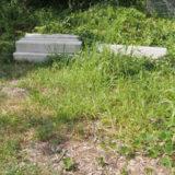 鬱蒼と生える雑草