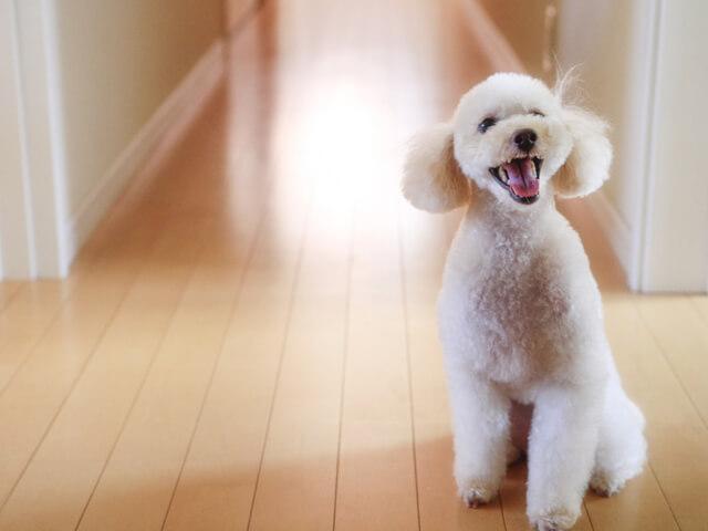 賃貸マンションで飼われている犬